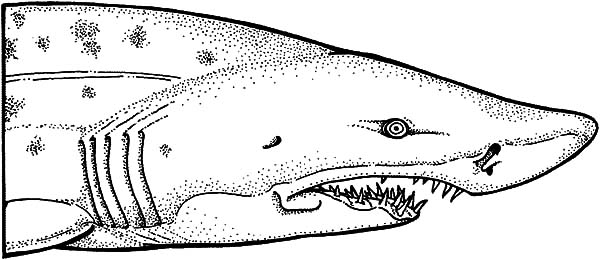 shark jaws coloring pages for kids shark jaws coloring pages for