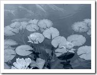 Flores caídas en el pantano de la vida.