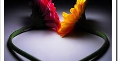 flor-amor.jpg