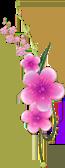 flores_subiendo