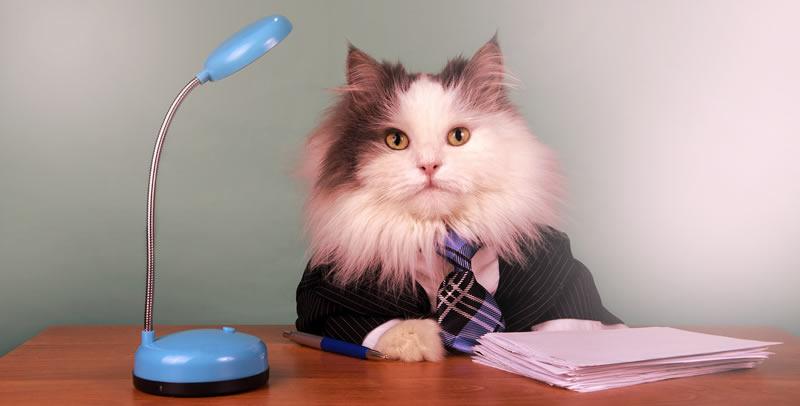 Tener un gato no te permitirá volverte una creída