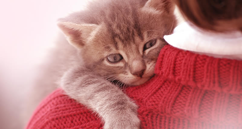 Los gatos son amorosos