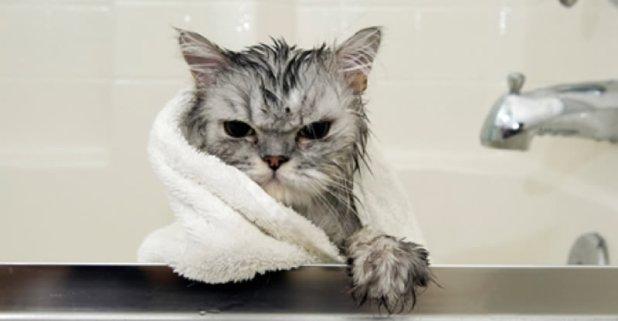 Los gatos son bastante higiénicos