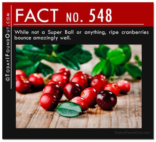 TIFO Quick Fact 548