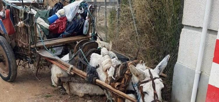 Court remands 2 men over alleged cruelty to donkey