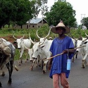 Numan youths protest herdsmen killings at the National Assembly