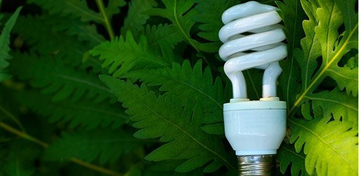 Cfl Light Bulbs Facts