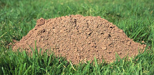 Identifying The Cause Of Holes In Your Lawn Todays