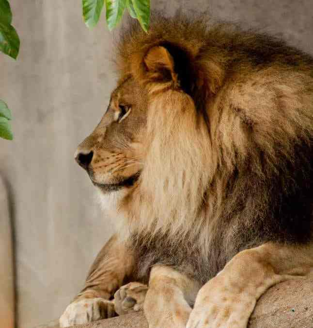 Win Tickets to the Louisville Zoo