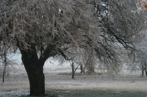 ice-storm-2007_005.JPG