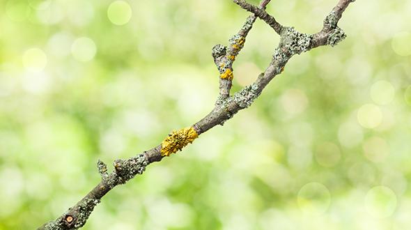 marietta ga dying tree limb