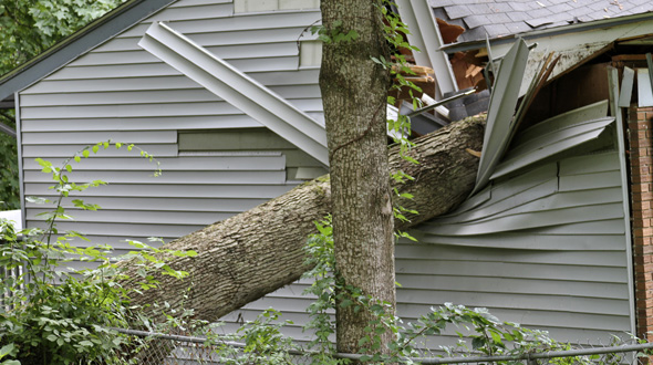 Tree fall through home during severe weather