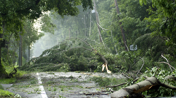 Trees damaged and fallen in road after storm