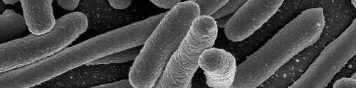 La Escherichia Coli vive en nuestros intestinos.