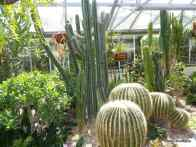 Arid House, Allan Gardens Conservatory