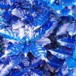 hoja azul