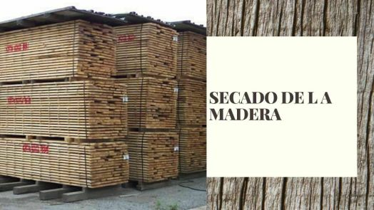 secado-de-la-madera-miniatura