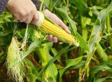 ¿Porque los alimentos orgánicos son más caros?
