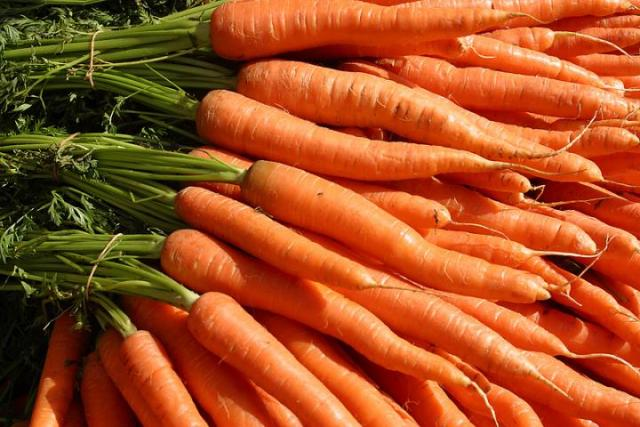 cultivo de zanahorias