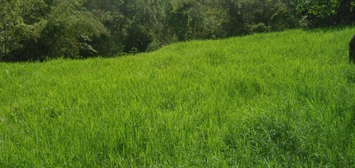 Consejos para cultivar pasto
