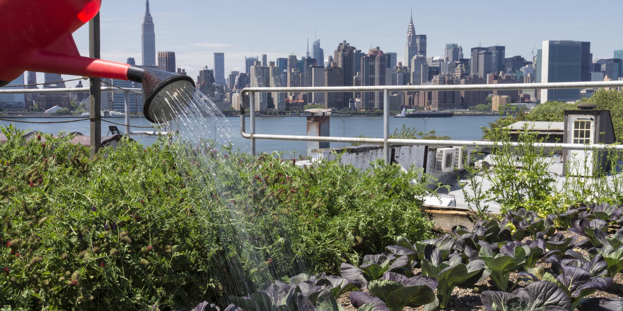 ¿Que es la agricultura urbana?