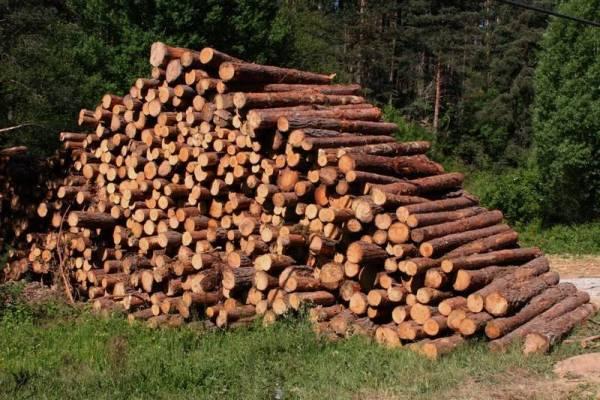 cultivo de madera