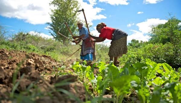 agricultura de subsistencia