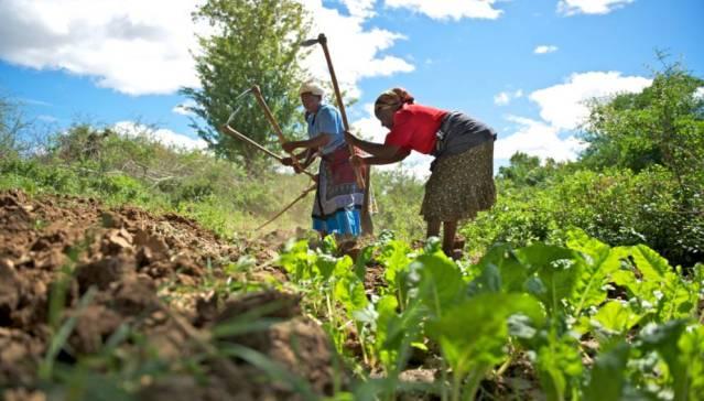 Analizando y conociendo la agricultura de subsistencia
