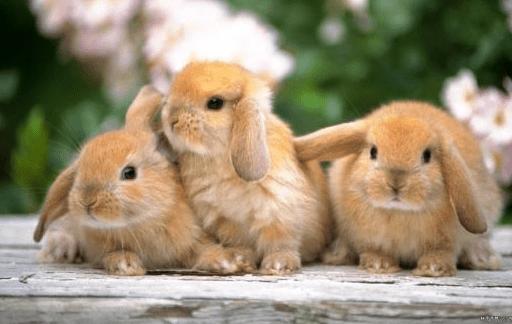 conejo temblando