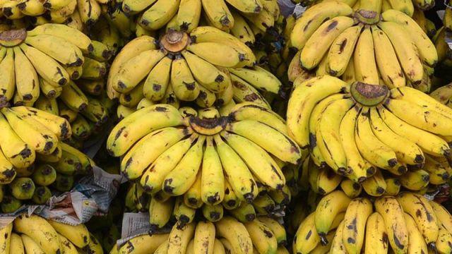 Datos históricos sobre el cultivo de banano