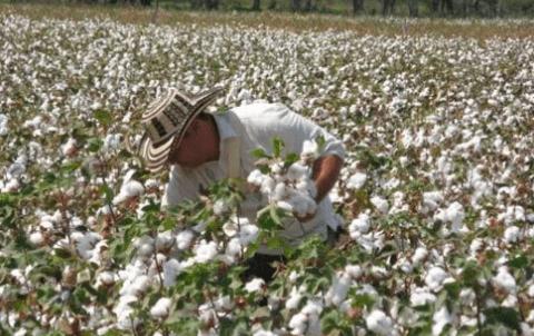 principales paises productores de algodon