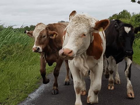 enfermedades comunes los animales del campo