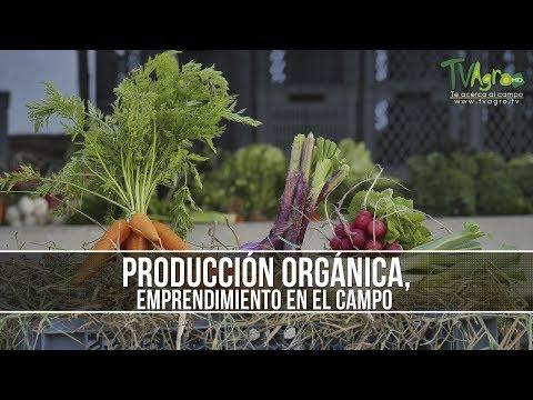 Como Realizar una Agricultura Limpia Sostenible