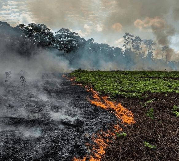 incendio en el amazonas fotos