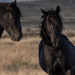 cola de caballo información y datos importantes