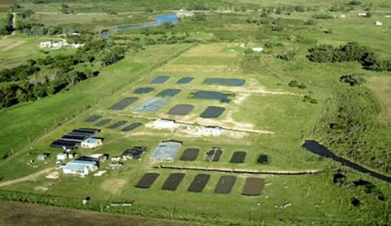 Granja de cultivo de langostas