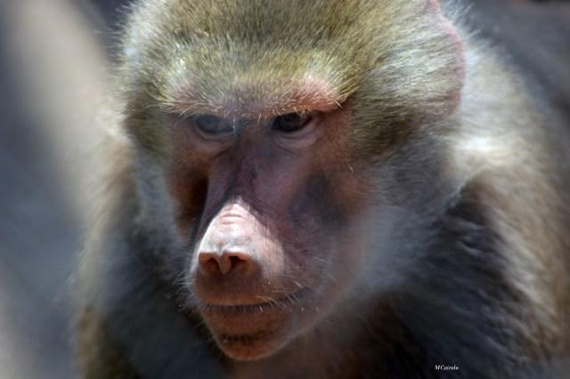 Mono frente