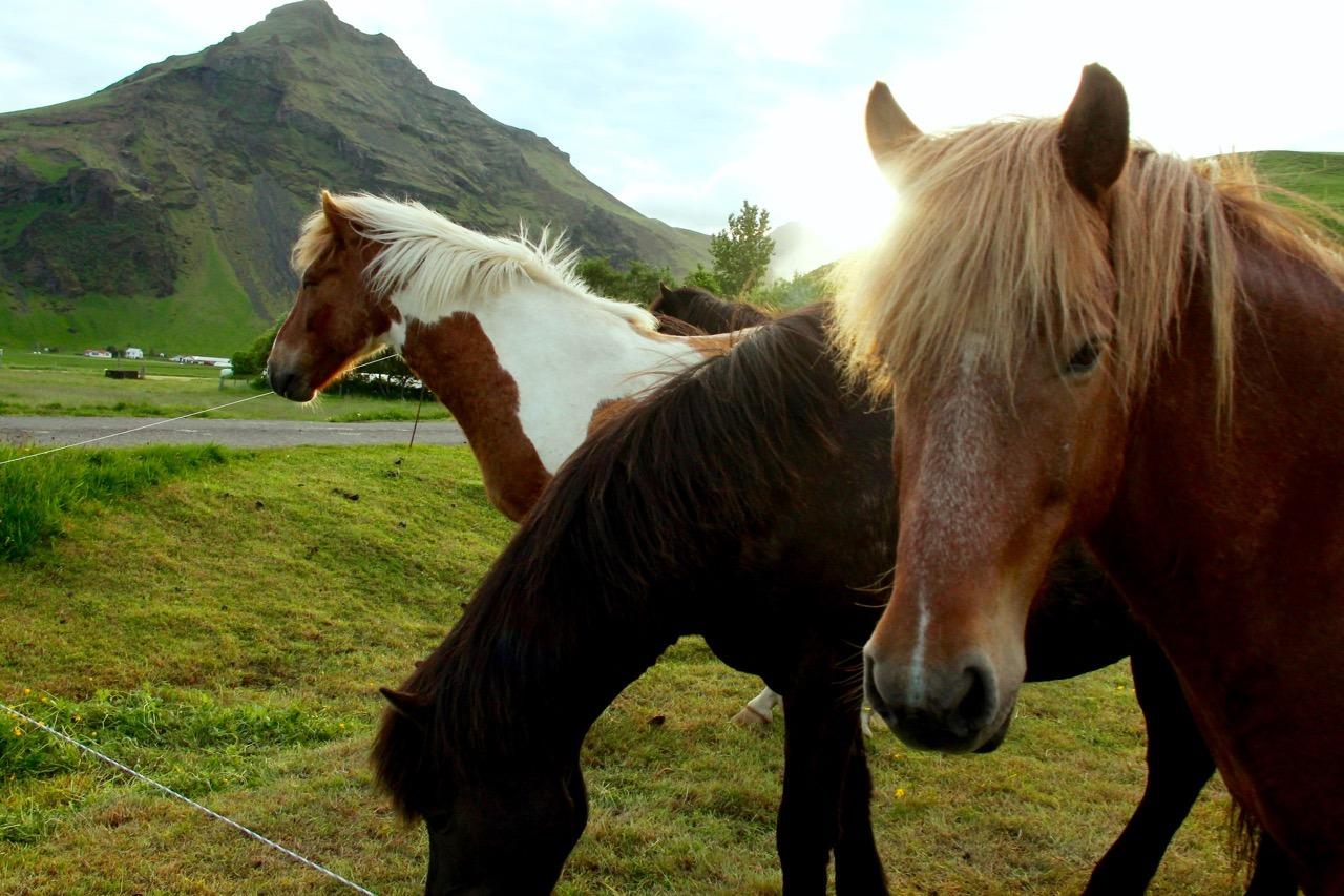 Iceland Road Trip - 14