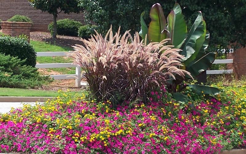 Tall Purple Planters