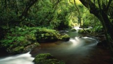 jungle_river_trees_moss_lianas_48348_3840x2160