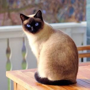Accessoires pour chat : Comment limiter les dépenses?