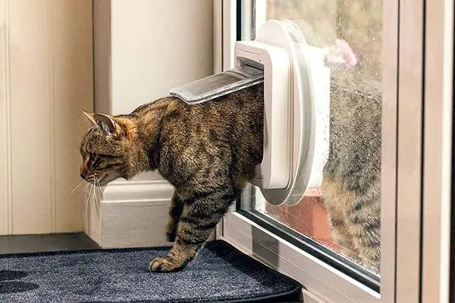 Comment choisir sa chatière ?