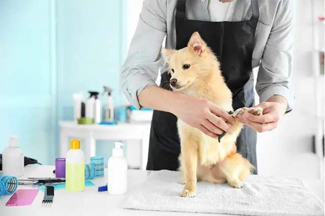 Qu'est-ce qu'un Toilettage Canin ? Le Toilettage Chien, étapes par étapes.
