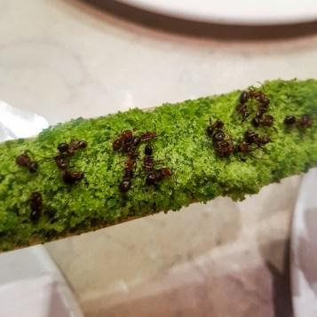 Mravlje - ogosta sestavina moderne nordijske kuhinje