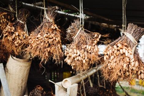 Sušeni arašidi, med Kalawom in jezerom Inle, Mjanmar