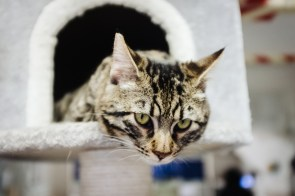 Mačje zavetišče Torre Argentina, izlet v Rim