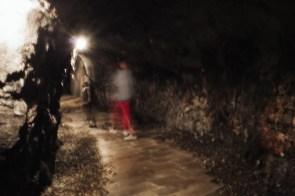 Predor v vinski kleti Guerila, Planina, Vipavska dolina