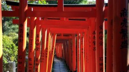 20141108 Tokyo Nezu Temple