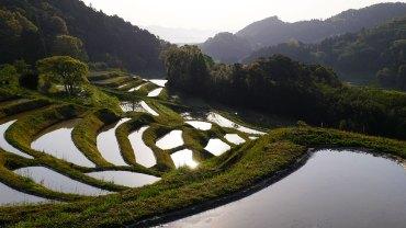 Hiratsuka terraced rice field