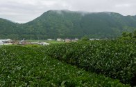20150518-Mie-Tea-Field-Ise